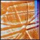 Cornici -  - Sicil Olympia pollok 10727 arancio