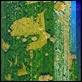 Cornici -  - Sicil Olympia Pollock Verde Oro