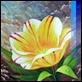 Dipinti ad Olio -  - Fiore