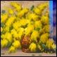 "Dipinti ad Olio -  - F. Giordano ""Mimose"""