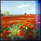Dipinti ad Olio -  - Campo di papaveri