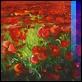 Dipinti ad Olio -  - Papaveri