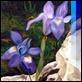 Dipinti ad Olio -  - Iris