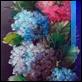 Dipinti ad Olio - Roberto Zaccardelli - Vaso con fiori