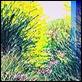 Grafica di Autore - Franco Azzinari - I prati dai mille colori
